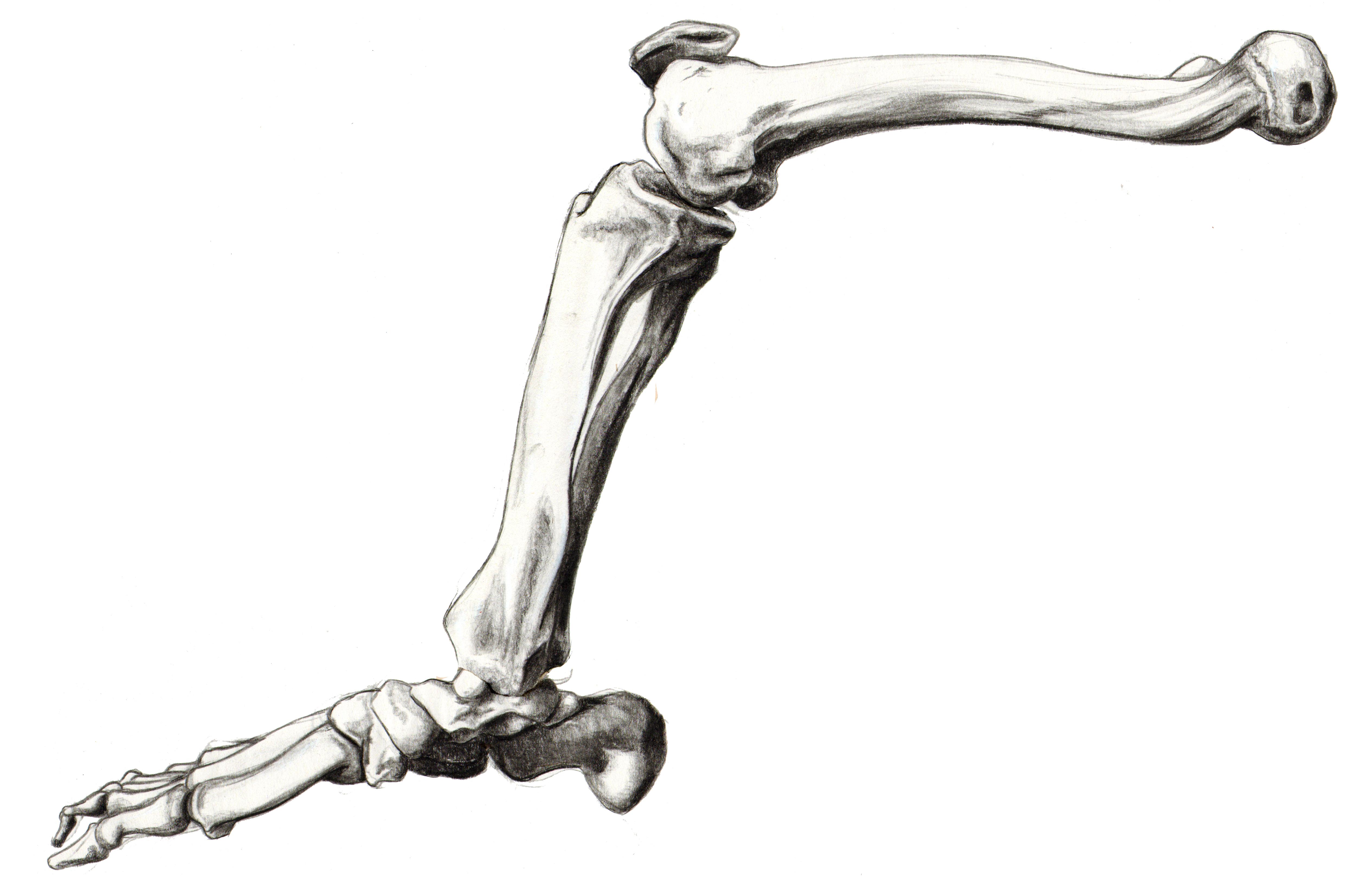 Skeleton Leg Breejerickson